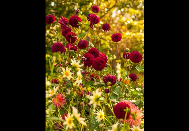 TCF_SFS_110214_Fall_Flowers-7_mc