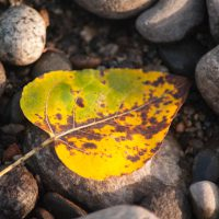 leaf, fall, autumn, rocks
