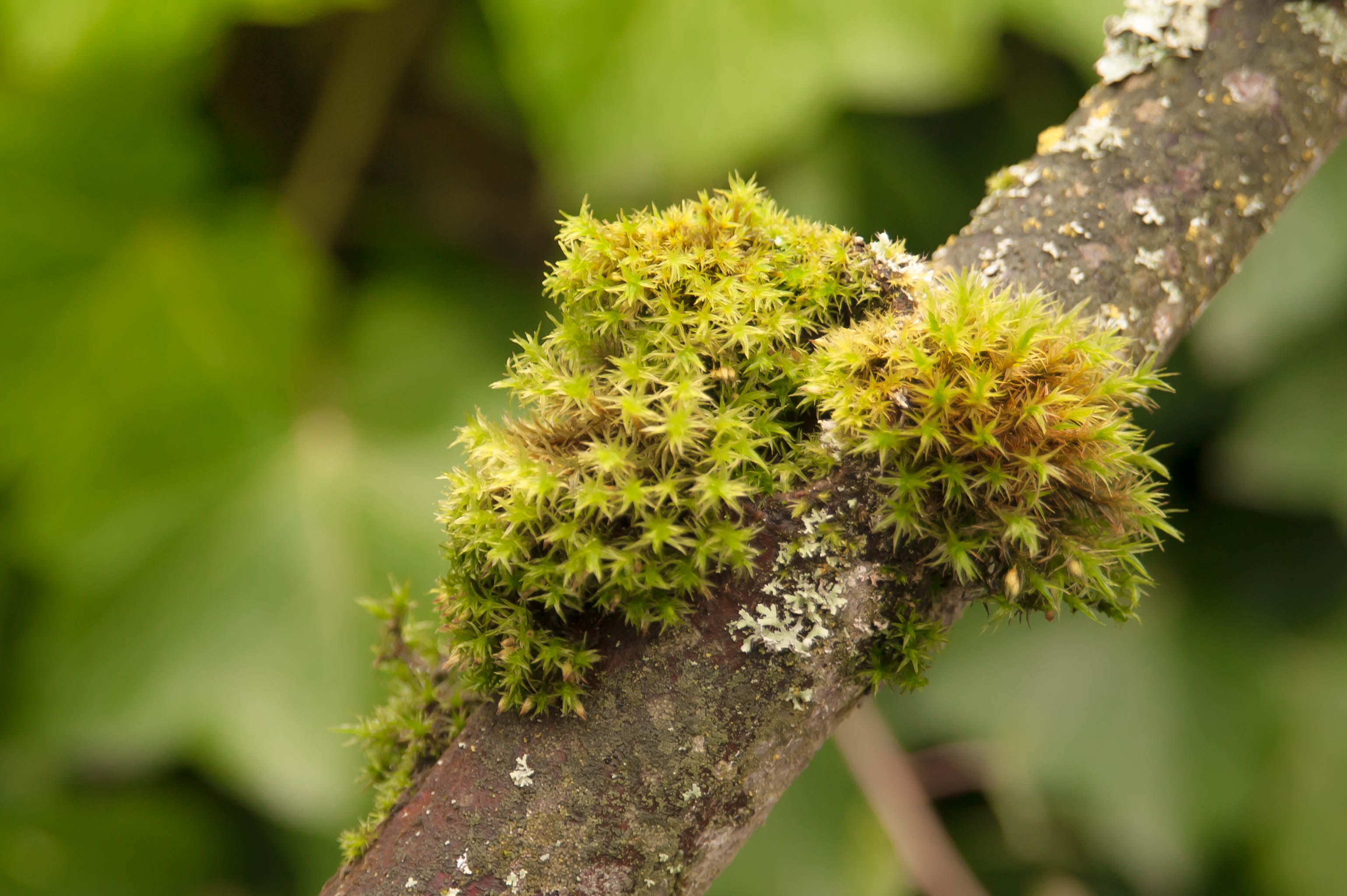 moss and lichen