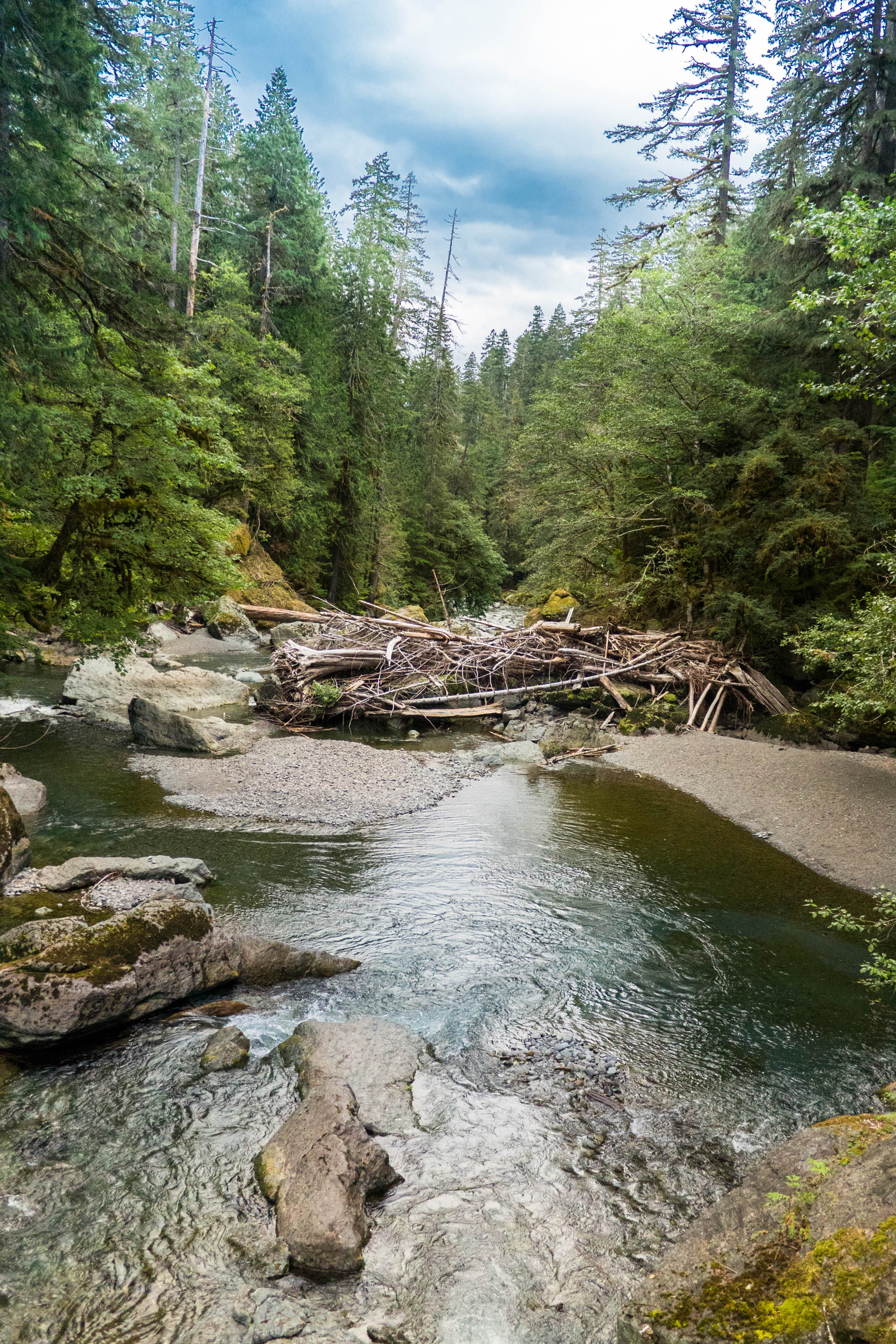 Olympic National Park scenic