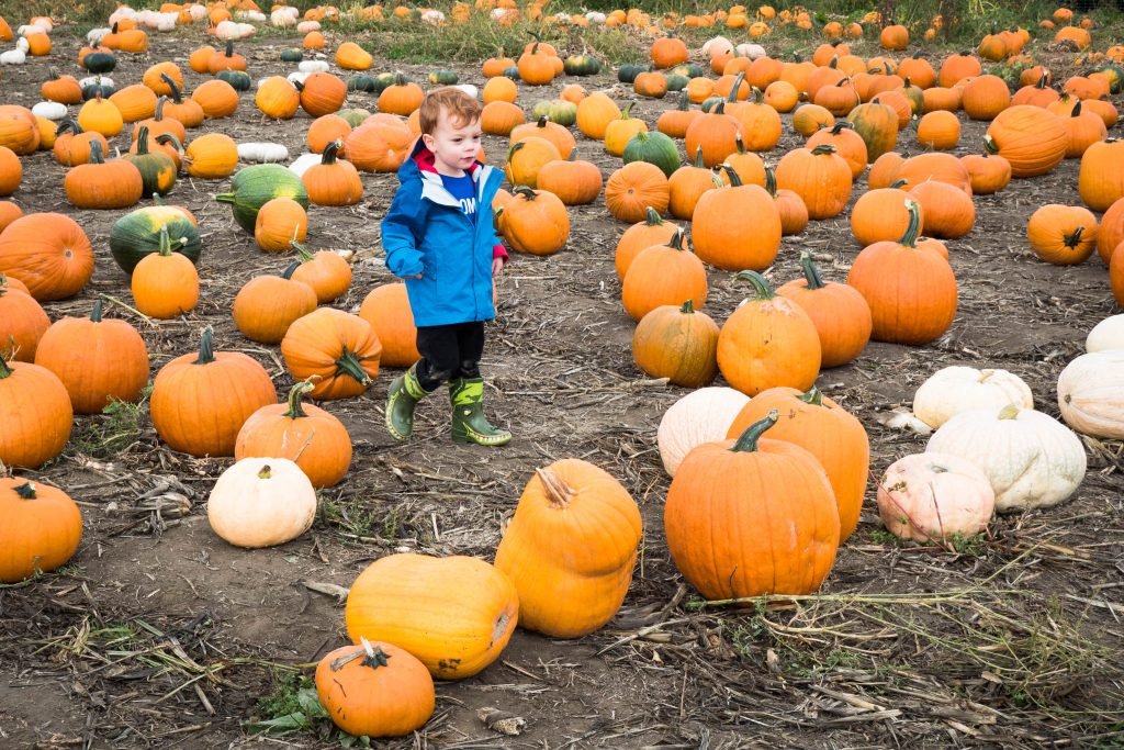 boy, child, pacific northwest, pumpkin, pumpkin patch, pumpkins, washington state
