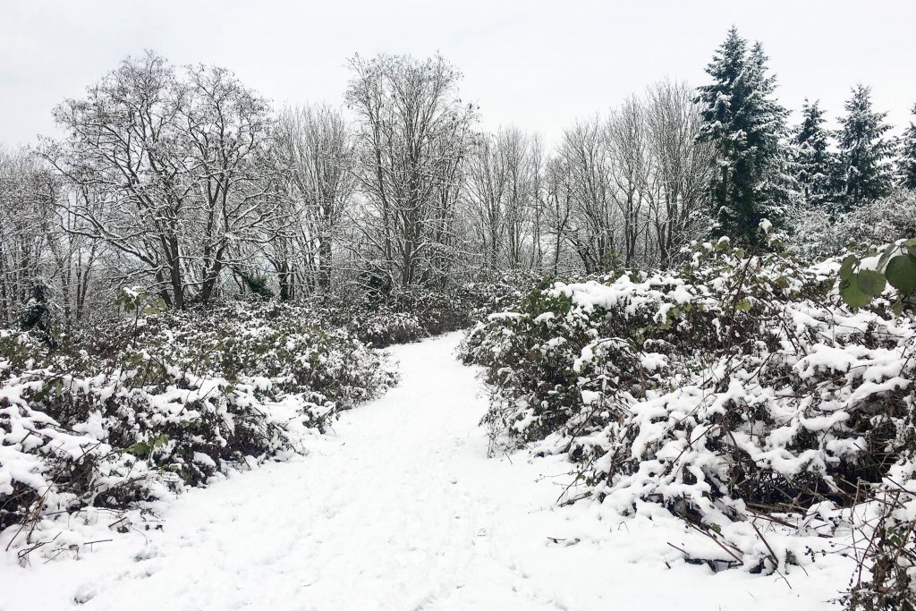 Carkeek Park, Christmas, Winter, snow