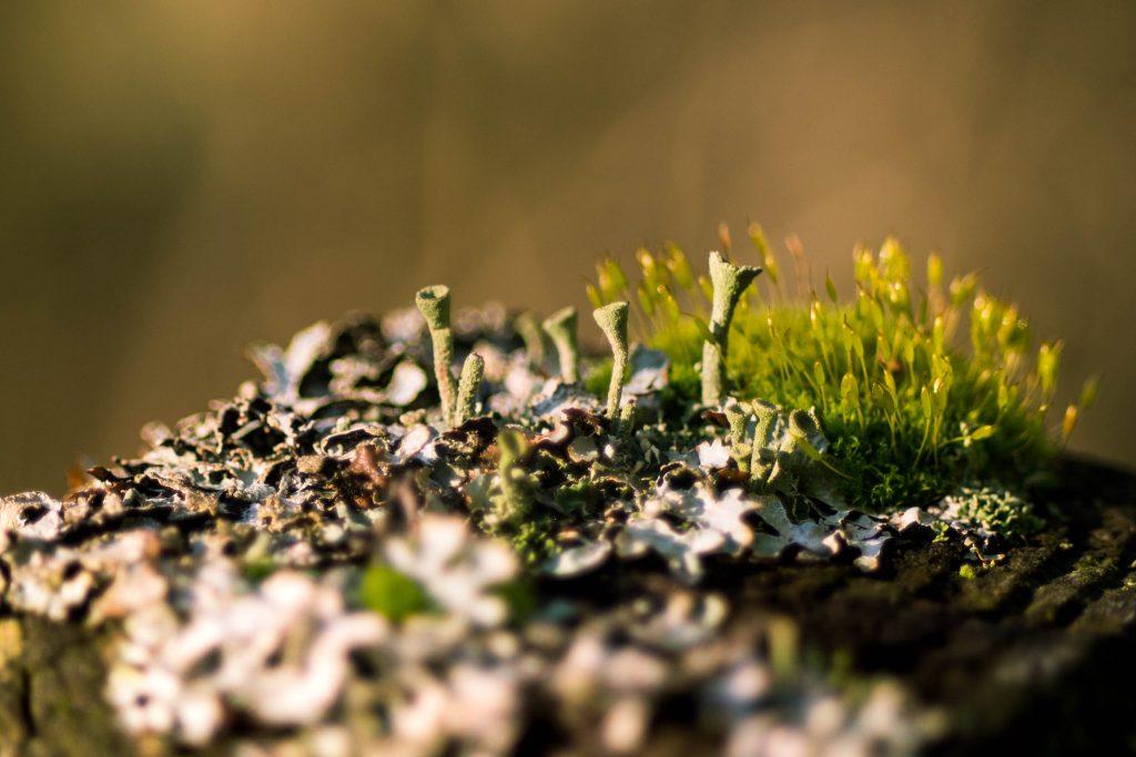 boeing creek park, lichen, macro, moss, shoreline park
