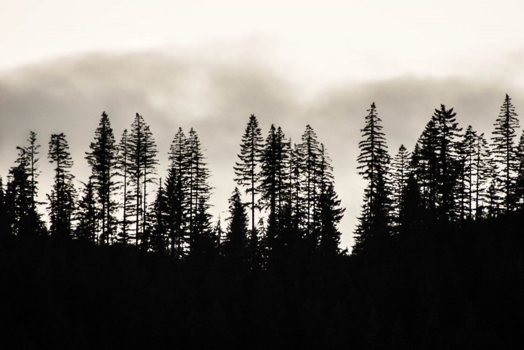 clouds, cloudy, forest, silouette, trees