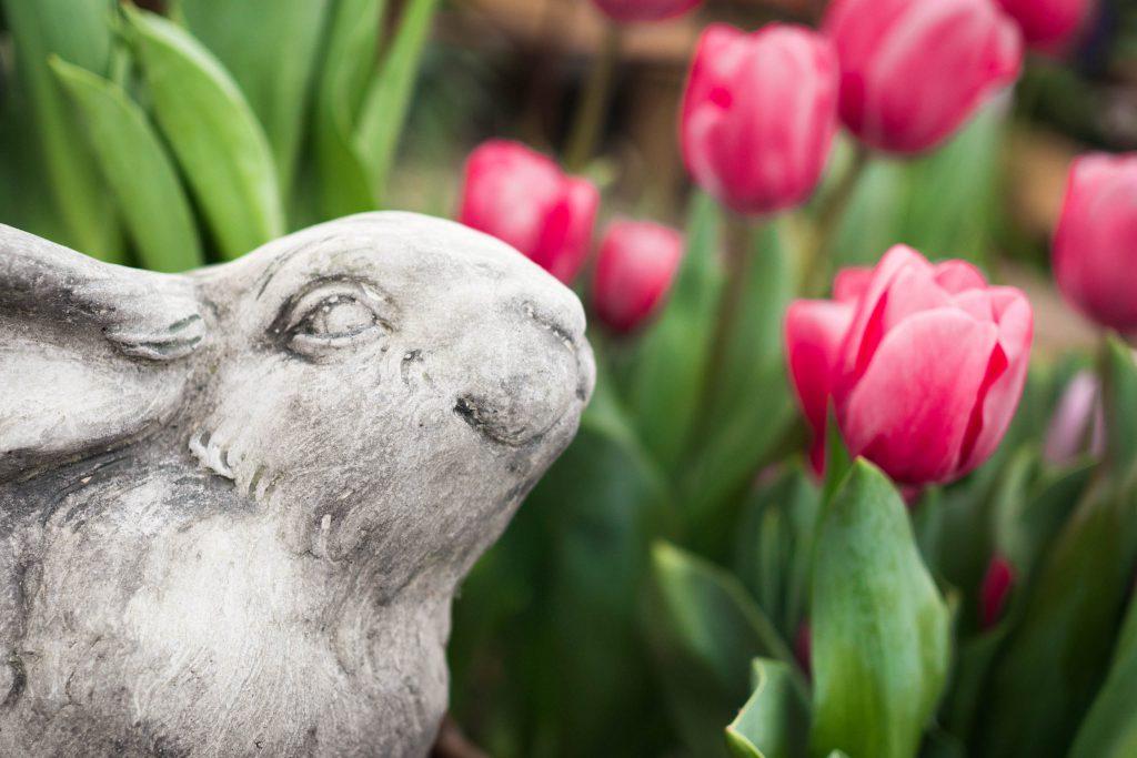 bunny, garden bunny, spring, spring flowers, tulips