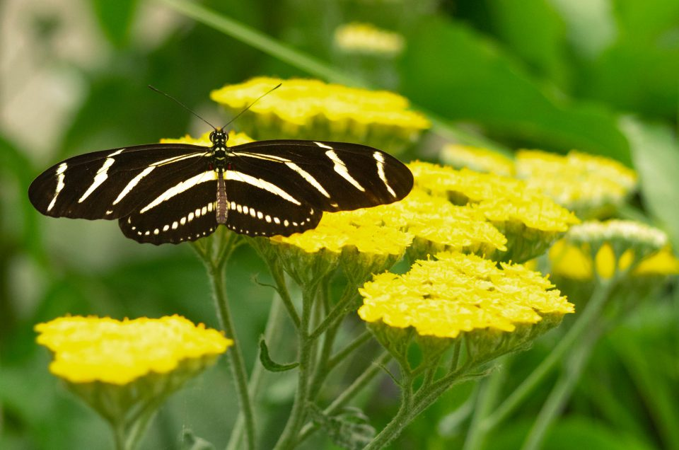 ~ Issue 351: Butterfly Garden ~