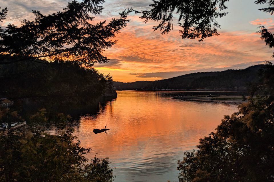 BC, blue heron, british columbia, coach house, coach house on the cove, pender island, sunset, vacation rental