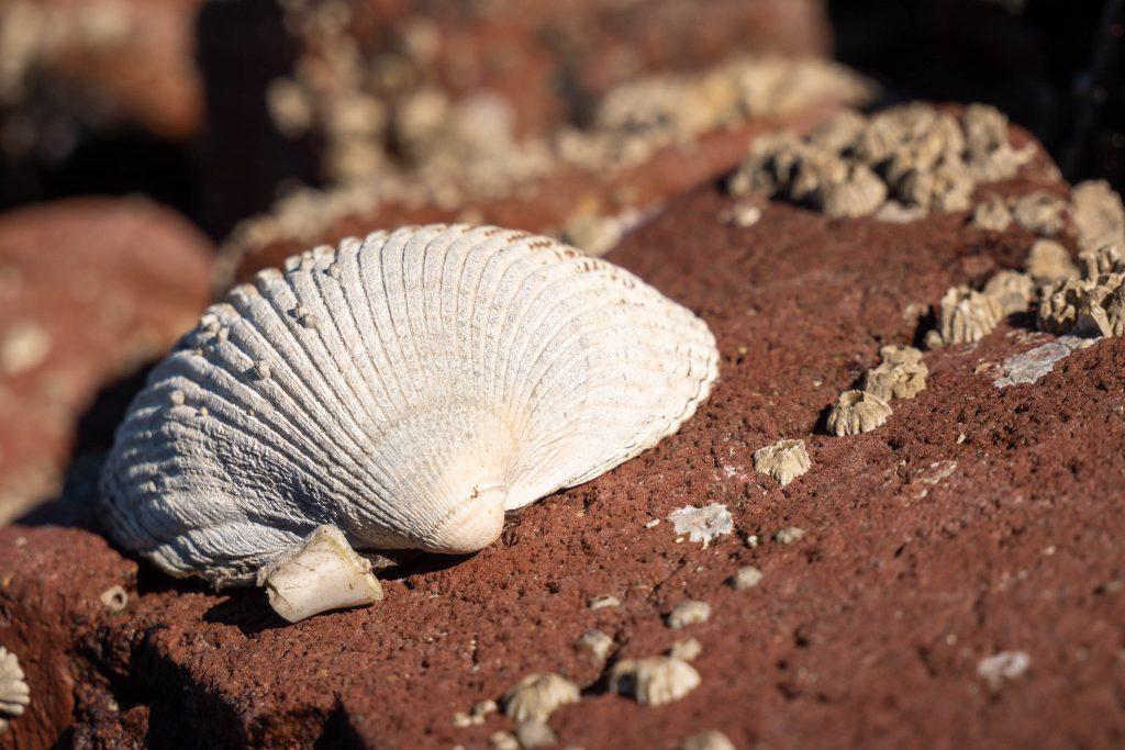 depth of field, sea shell, seashell, shell texture