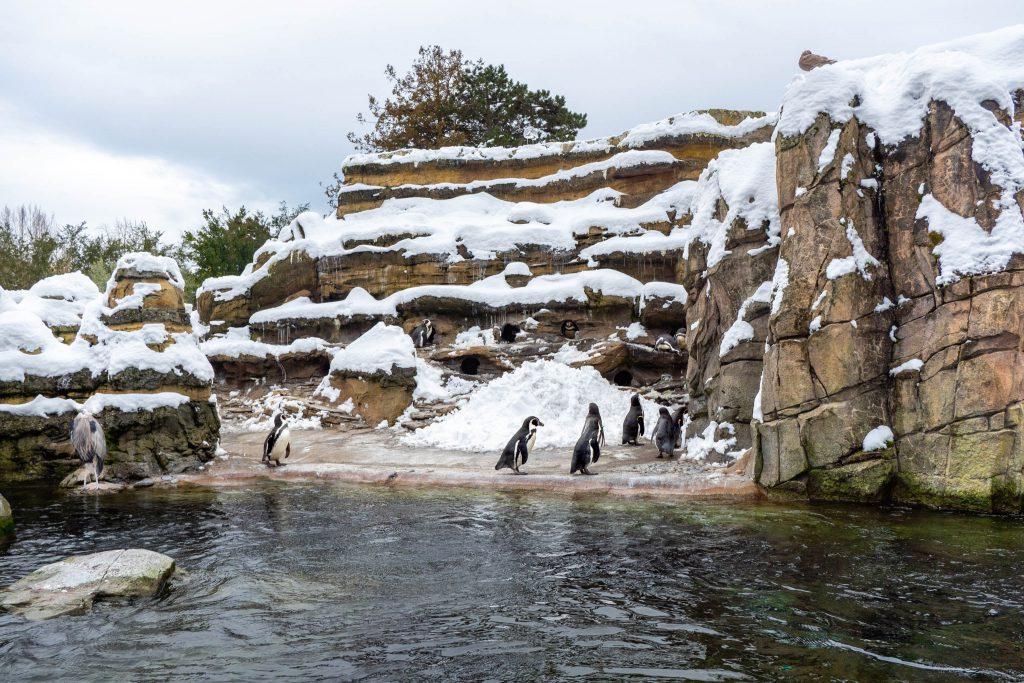 penquins, seattle zoo, woodland park zoo